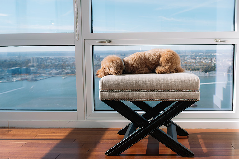 HOW TO CHOOSE THE BEST FLOORING FOR PETS